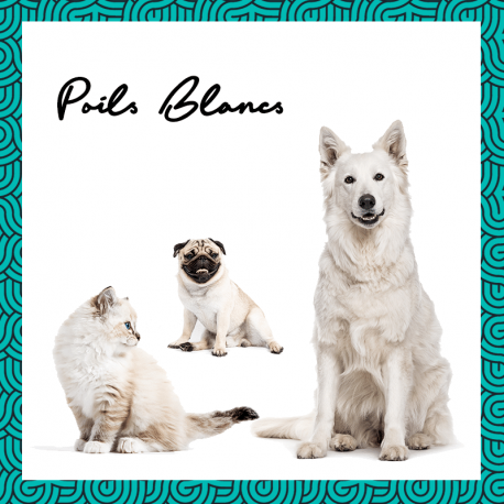 Shampooing solide et vegan poils Blancs pour chien 60ml