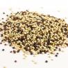 Quinoa tricolore en vrac Bio