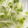 GermLine Mustard to sprout 100 gr - Bio