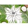Evolve - Cotton Fresh Deodorant Cream 30ml