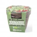 Cherry tomatoes Pot terrecota basalt 13 cm Organic