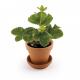 Radis & Capucine - Pot 8 cm with cup strawberry